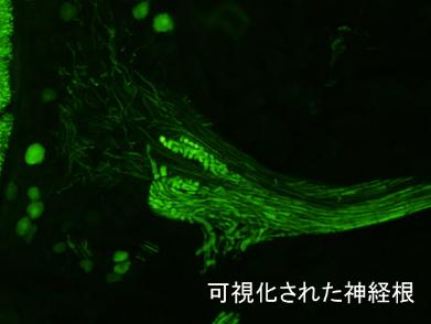 神経 図1